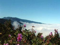 La Palma: la isla bonita!